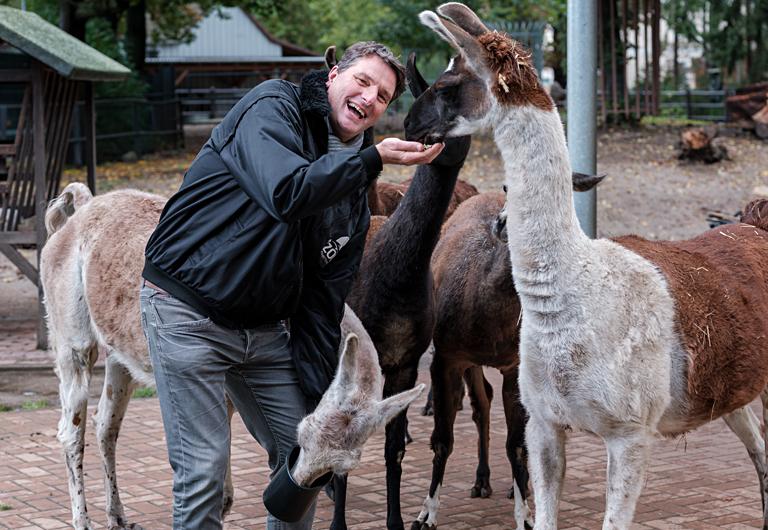 Lamas in Hoyerswerda bei der Fütterung