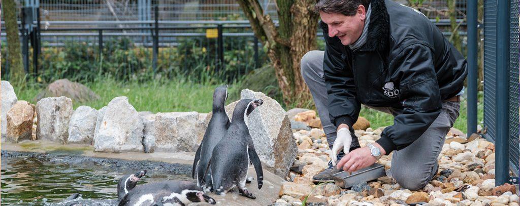 Zoodirkektor Hoyerswerda bei den Pinguinen